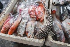 卖新鲜的海鲜钓鱼在旅游胜地地方市场上在Jimbaran,巴厘岛 免版税库存照片