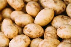 卖的新鲜的有机年轻未加工的土豆在蔬菜批发市场 免版税库存图片