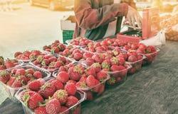 卖的美丽的成熟草莓在塑胶容器的盘子在挪威在一个晴天 水平的框架 免版税库存图片