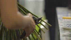 卖花人切开花词根与从事园艺的剪刀的 影视素材