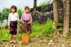 卖花,北越南的孩子 免版税库存照片
