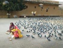 卖鸟饵,斋浦尔,印度的妇女 免版税库存图片