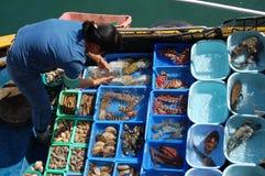 卖从一条小船的鲜鱼在香港 库存照片