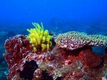 南中国的珊瑚海 免版税库存照片