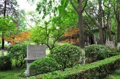 南京大学 库存照片