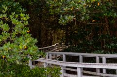 南佛罗里达公园木板走道到美洲红树里 免版税库存图片
