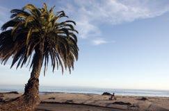 南加利福尼亚海滩 库存照片