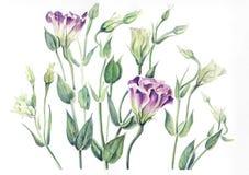 南北美洲香草干燥标本集  库存照片