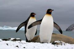 南南极的佐治亚 库存照片