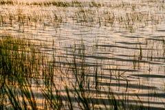 南卡罗来纳低地国家在日落的沼泽草在洪水以后 免版税库存图片
