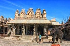 南印度的寺庙大象 库存照片