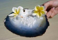 南和平的珍珠 库存照片