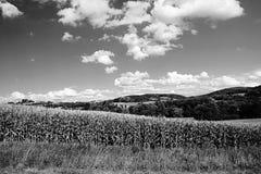 南在Volyne市附近的波希米亚和小山单色风景有麦地的在第11威严2018的捷克共和国的在期间 库存照片