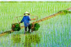 南定,越南- 2014年7月13日-未认出的妇女运载的米包对在她的肩膀杆的领域 免版税库存图片