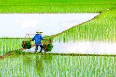 南定,越南- 2014年7月13日-未认出的妇女运载的米包对在她的肩膀杆的领域 免版税库存照片