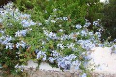 南希腊波罗斯岛,九头蛇,埃伊纳岛06的海岛 15 2014年 热的总和希腊海岛的开花的本质的风景  库存图片