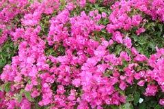 南希腊波罗斯岛,九头蛇,埃伊纳岛06的海岛 15 2014年 热的总和希腊海岛的开花的本质的风景  免版税库存照片