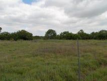 南得克萨斯牧场地 图库摄影