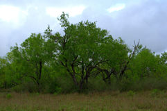 南得克萨斯风景 免版税图库摄影
