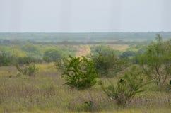 南得克萨斯风景 免版税库存图片
