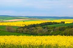 南摩拉维亚的麦子和油菜籽领域 免版税库存图片