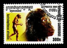 南方古猿属africanus,人类serie的演变,大约2001年 库存图片