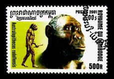 南方古猿属rudolfensis,人类serie的演变,大约2001年 图库摄影