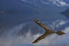 南方的Carretera的湖 免版税库存照片