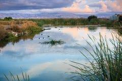 南旧金山湾,森尼韦尔,加利福尼亚沼泽的日落风景  免版税库存图片