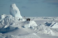 南极企鹅 库存图片
