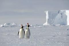 南极圣诞节 库存图片