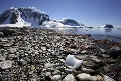 南极洲海湾cuverville 免版税库存照片