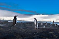 南极洲,看彼此的两只gentu企鹅 免版税库存图片