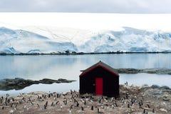 南极洲-企鹅,冰川,小的棚子   图库摄影