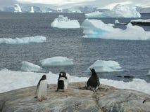 南极洲 免版税库存照片