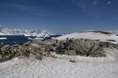 南极洲cuverville海岛 库存图片
