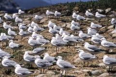 南极管鼻获 免版税库存图片