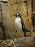 南极鸟 库存图片