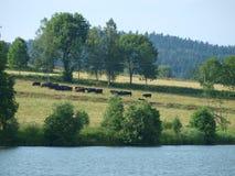 南波希米亚的乡下的看法 库存图片