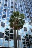南海滩的摩天大楼 库存照片