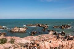 南海的海岸 库存图片