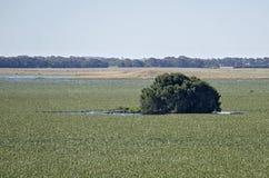 南澳大利亚盐水湖圣所  库存图片