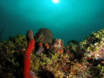 南珊瑚佛罗里达的礁石 免版税库存照片