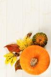 南瓜、与五颜六色的叶子的金瓜和橡子 库存图片