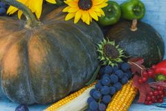 南瓜、向日葵和不同的成熟菜 免版税库存照片