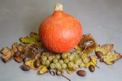 南瓜、栗子、果壳、葡萄,橡子和藤离开 免版税库存照片