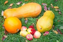 南瓜、苹果和莓果在绿草 库存照片