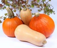 南瓜、金瓜和南瓜五颜六色的品种在白色背景 库存图片