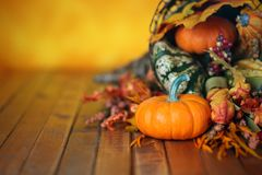 南瓜、金瓜和叶子在秋天聚宝盆 库存照片