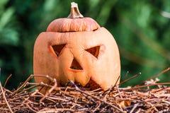 南瓜几天在假日以后helloween 免版税库存照片